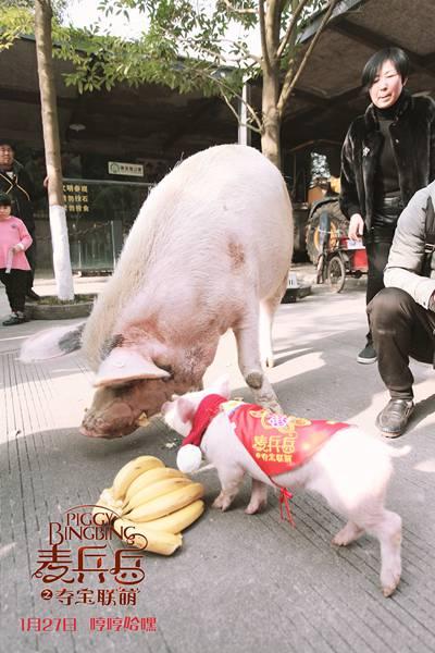 猪坚强、麦兵兵,两只不平凡猪的相遇,擦出温暖整个寒假的火花