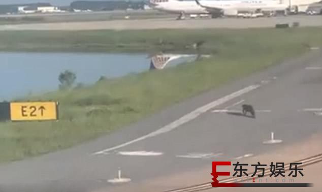 飞机跑道惊现鳄鱼  下一秒惊险就这样发生了!