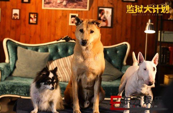 电影《监狱犬计划》引全民热议 群星演绎为爱救赎获八方支持