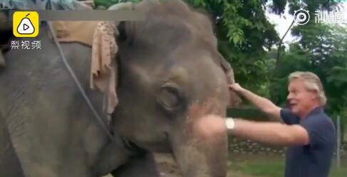 主持人节目中揪耳踩鼻骑大象 真人秀遭民众抵制!