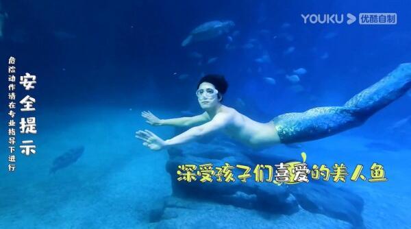 《看我的生活》王大陆当淘宝客服被痛骂 陈学冬扮人鱼与鲸鲨共舞